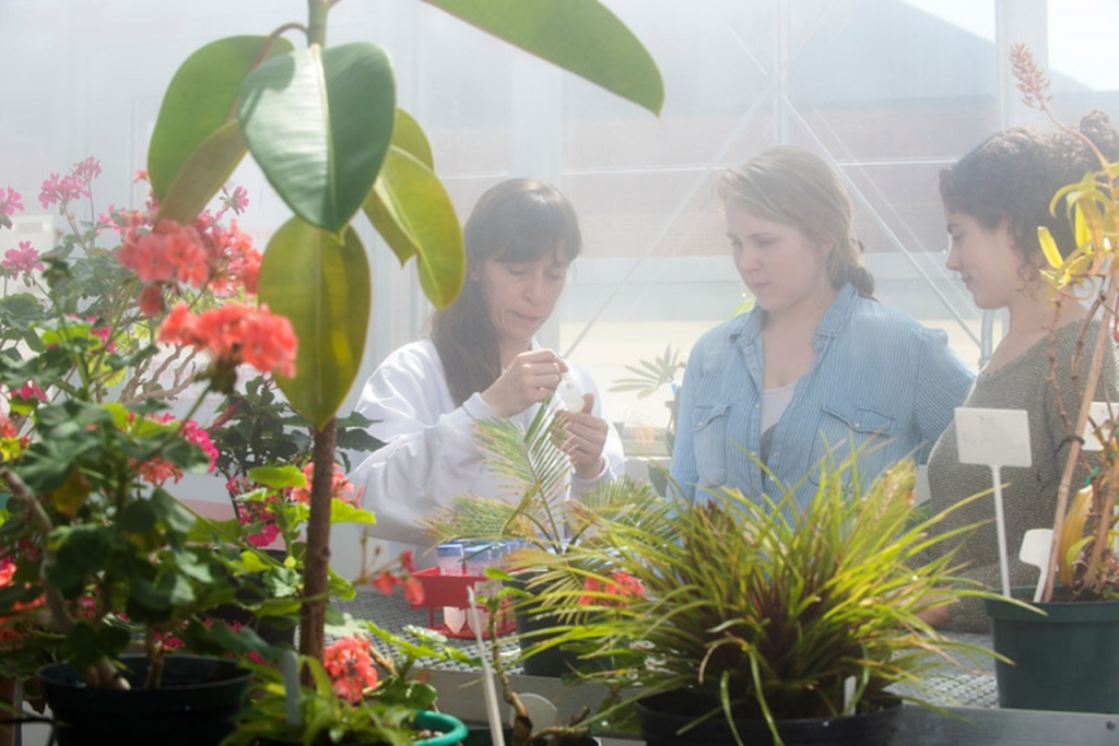 """Biology students Kadiera Ingram and Jessica Quinta work with Rebecca Forkner, assistant professor, examining plant defenses and plant-bacteria interactions in Baptisia species of wild indigo in the greenhouse on campus. Photo by Evan Cantwell/Creative Services/George Mason University"""